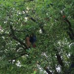 04 Herr Passon schüttelt kräftig im Baum
