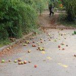 08 auf auf dem Vorderhof gibt es noch Äpfel